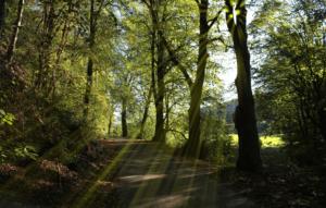 有酸素運動の散歩
